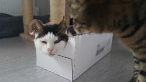 Teddy låda 2