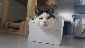 Teddy låda 3